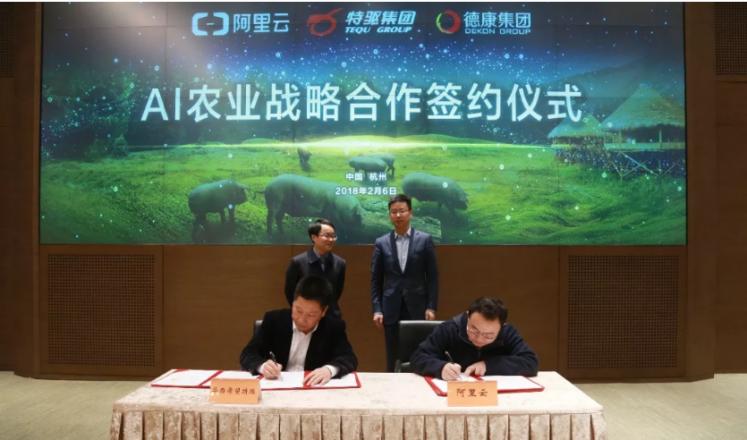 阿里云同特驱集团、德康集团达成合作 产业AI深入养猪业